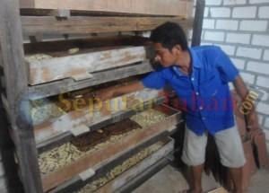 Pujianto (30), warga Dusun Ndrudi, RT.2, RW. 2, Desa Sambungrejo, Kecamatan Semanding saat menunjukkan ulatnya