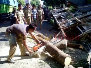 Petugas memotong pohon yang tumbang
