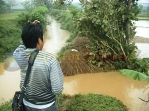 PETANI RESAH : Kondisi tanggul sungai jebol membuat lahan pertanian terendam banjir