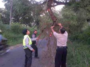 Patroli pohon patah