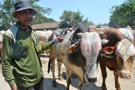 Penjual sapi Tuban