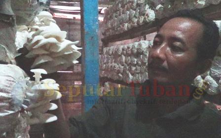 Budidaya jamur tiram
