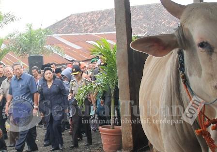 Presiden kunjungi peternakan sapi di Tuban
