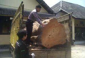 Pelaku Lain Dikejar : Barang bukti kayu curian diamankan Polisi sebagai barang bukti