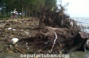 PARAH : Kondisi pantai yang rusak parah akibat diterjang ombak dan pohon ditebang