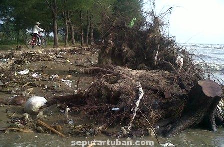 Abrasi laut Tuban