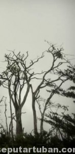DINAMIKA: Populasi penduduk tinggi membuat kebakaran hutan mustahil dihilangkan, meski dapat diminimalisir.