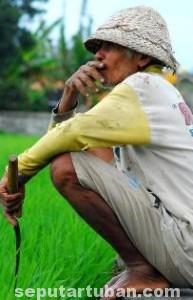 DIRUNDUNG NESTAPA: Nasib petani dari waktu ke waktu tetap tak bernjak. Seperti lingkaran tak berujung.