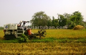 LEBIH CEPAT : Proses panen padi menggunakan alat modern