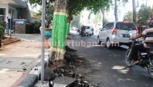 DIPERTAHANKAN: Keberadaan pohon angsana yang merusak fasiltas jalan dan trotoar di Jalan Basuki Rahmad Kota Tuban, Selasa (21/10/2014) siang. (foto: MUHLISIN)