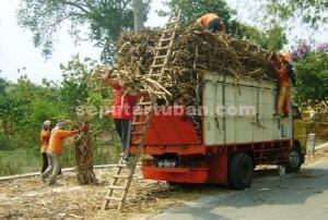 MERADANG : Tebu hasil panen dimuat truk untuk dijual ke perusahan tebu