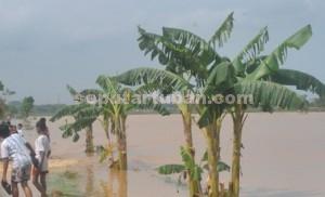 SKENARIO CEKDAM: Salah satu wilayah di Kabupaten Tuban yang setiap tahun rutin direndam banjir bandang.