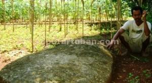 DIPERTAHANKAN: Batu prasasti yang diyakini bekas peninggalan Majapahit di Desa Prunggahan Kulon, Kecamatan Semanding, Rabu (25/03/2015) siang. foto: ARIF AHMAD AKBAR