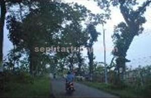 TIDAK MENYALA: Sudah hampir dua minggu ini penerangan jalan umum (PJU) di di sebelah utara Desa Margomulyo, Kecamatan Kerek ini mati.