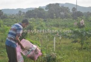 MULAI UNTUNG : Ali Imron saat merawat tanaman klengkeng