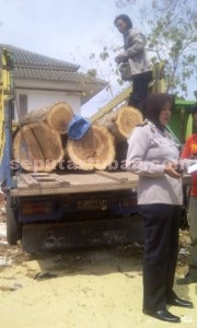 PEMBALAKAN: Kayu jati glondongan yang berhasil disita kini diamankan di Mapolres Tuban.
