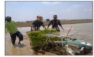 UNTUK PETANI: Dandim TubanLetkol Kav Rahyanto Edy Yunianto melakukan pencanangan tanam perdana sistem rice of intensification (SRI) dengan menggunakan mesin transplanter di Desa Kradenan, Kecamatan Palang, Jumat (25/09/2015) pagi