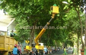 RAWAN TUMBANG : Petugas dari Dinas Pekerjaan Umum sedang memotong ranting pohon di kawasan jalan Basuki Rahmat