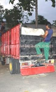 BARANG BUKTI: Inilah sapi hasil curian komplotan Susilo yang langsung diserahkan kepada pemiliknya di Desa Temandang, Kecamatan Merakurak.