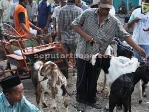 TURUN : Seorang penjual kambing membawa daganganya di pasar hewan