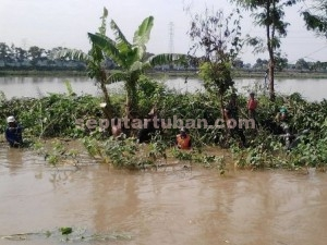 KOMPAK : Warga dan anggota Koramil Plumpang saat membersihkan tumbuhan klorak ditengah banjir sungai avour