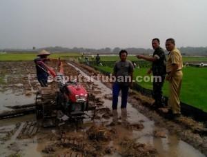 SINERGI : Danramil Plumpang bersama petugas pertanian meninjau petani yang sedang membajak sawahnya