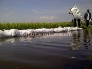 Was-was : Petani gotong royong membuat tanggul darurat agar tanamanya tidak terendam luapan sungai