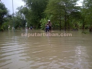 LANGGANAN : Banjir luapan sungai bengawan solo sudah menggenangi jalan poros desa, area persawahan dan pemukiman warga