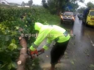 KERJA KERAS : Meski ditengah hujan lebat, anggota Polsek Plumpang tetap memotong pohon yang roboh.