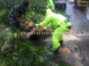 KOMPAK : Anggota Koramil dan Polsek Plumpang bahu-membahu menyingkirkan pohon tumbang
