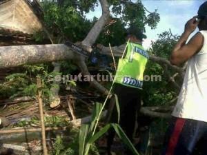 TANGGAP : Anggota Polisi sedang membantu memotong pohon yang tumbang menimpa rumah warga