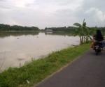 PETANI MERADANG : Kondisi persawahan dengan tanaman padi yang terendam banjir
