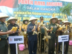 CEREMONIAL : Pangdam V Brawijaya (tengah) saat melakukan panen raya jagung didampingi pejabat lainya