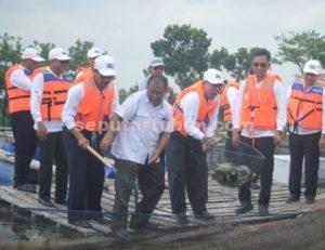 Suasana panen ikan keramba binaan PT Semen Indonesia