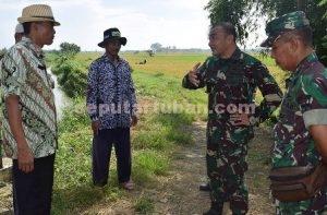 CEK LANGSUNG : Dandim 0811 Tuban, Letkol Inf. Sarwo Supriyo saat berdialog dengan petani saat blusukan