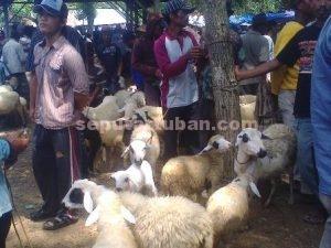DRASTIS : Harga hewan ternak selama beberapa pekan terakhir turun, juga terjadi di pasar hewan Kecamatan Jatirogo