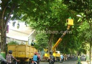 KERJA KERAS : Staf Dinas PU sedang bekerja memotong ranting pohon di kawasan jalan Basuki Rahmat Tuban