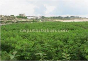 Reklamasi Pasca Tambang Petak 34-35 seluas 7,66 Ha (14.444 pohon) Kerja Sama dengan Perum Perhutani Tahun 2014