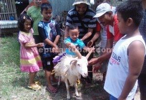 SERU : Keseruan anak-anak melihat dan naik kambing bertanduk lima