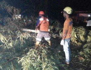 TERHALANG POHON : Petugas BPBD Pemkab Tuban saat melakukan evakuasi pohon tumbang di wilayah Kecamatan Palang