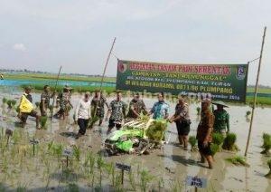KOMPAK : Danramil Plumpang, Muspika dan pimpinan instansi di Kecamatan Plumpang saat melakukan penanaman padi serentak