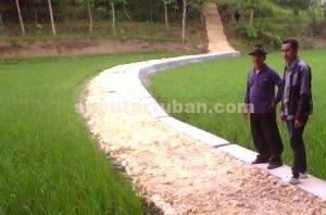 OPTIMALISASI PERTANIAN : Pembangunan jalan makadam memudahkan aktifitas warga